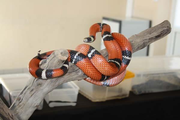 serpentblog.jpg